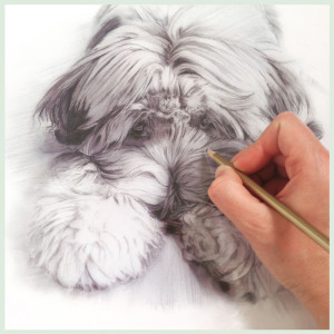 Drawing the lovely Holly for her owner.